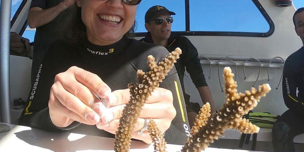 Learn about Coral and Coral Restoration with NSU