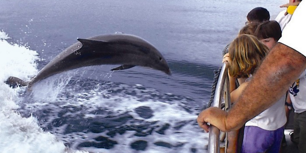MEEC pesents Dolphin Biology and Conservation with Jessica Powell