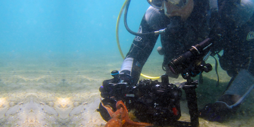 MEEC pesents Octopus Behavior and Biology with Chelsea Bennice