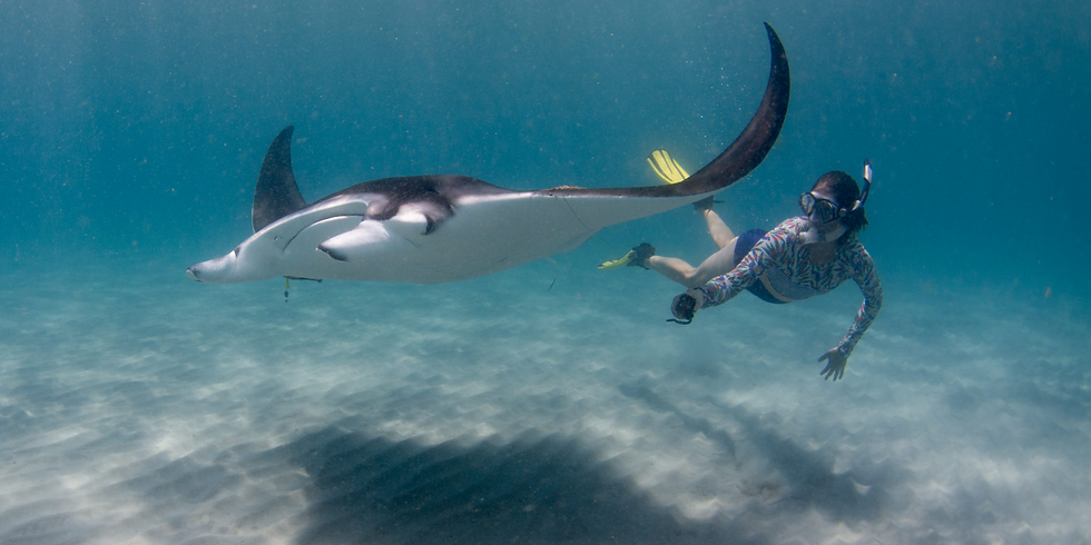MEEC pesents Manta Rays in Florida with Jessica Pate