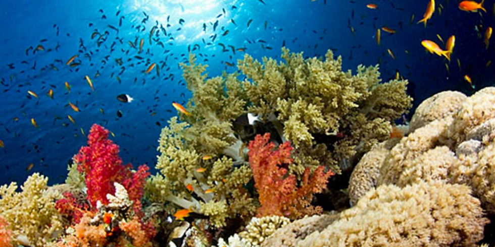 Nat Geo Presents: Historical Ecology of Corals (Grade 9+)