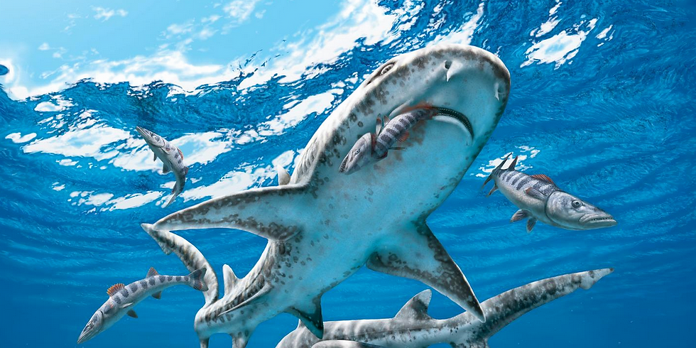 Sharks4Kids presents: How to Draw a Shark with Dr. Julius Csotonyi ( Age 7-11) (1)