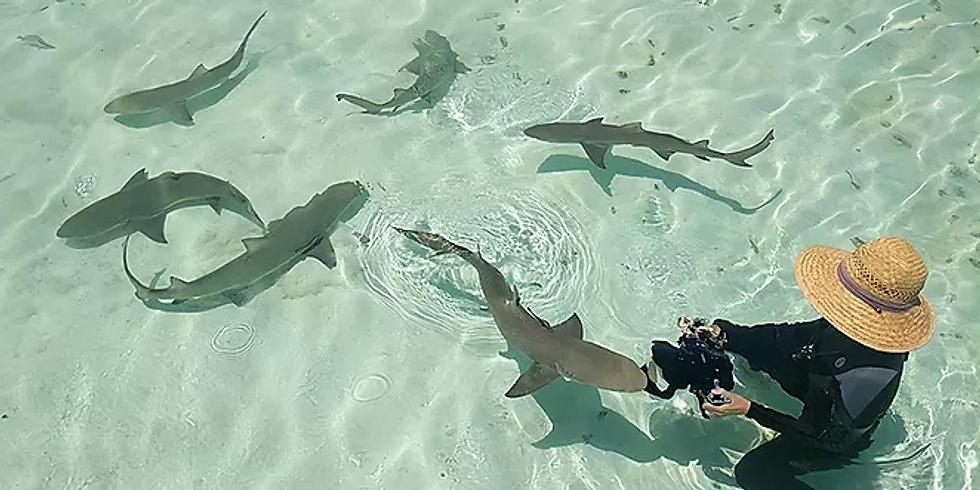 Sharks4Kids Presnts: Marine Biologist & Sharks4Kids Founder Jillian Morris
