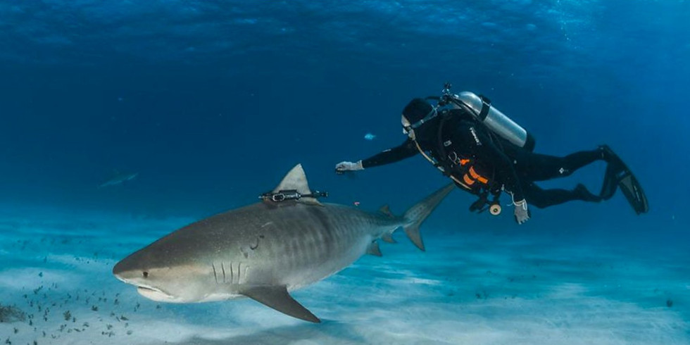 Sharks4Kids Presents: Satellite Tagging Sharks for Science with