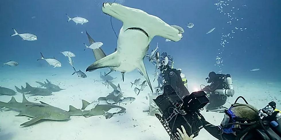 Sharks4Kids Presents: Underwater Cameraman Duncan Brake