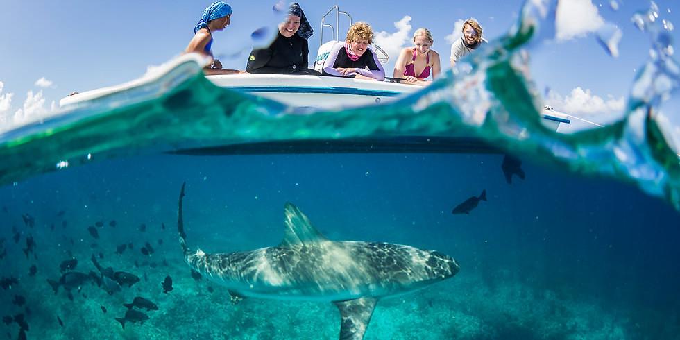 Sawshark Science with Patrick Burke   & Sharks 4 Kids