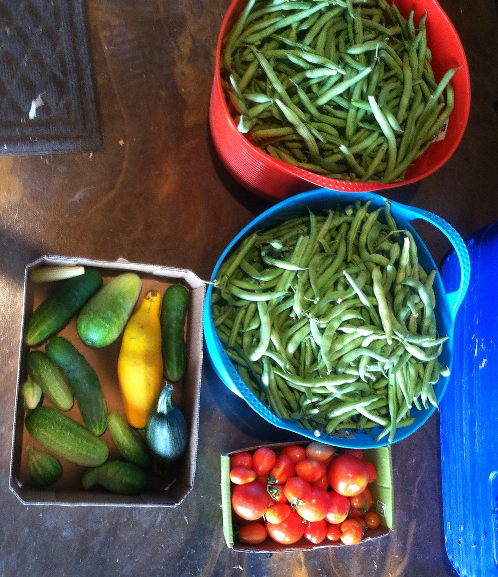 Garden goodies!  Mid-summer green beans, tomatoes and cucumbers.