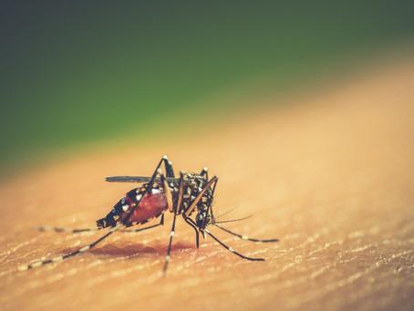 Cuidados com a dengue devem ser redobrados durante o verão