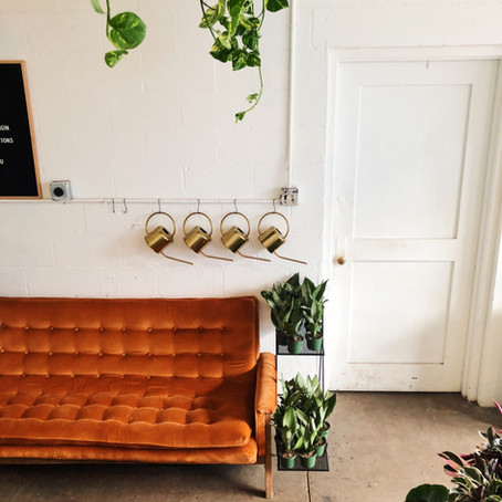 How to Add Plants to Your Indoor