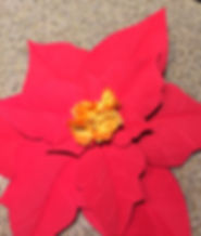 Kidfunideas.com poinsettia craft project picture example - what the flower looks like when finished