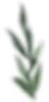leaves1.png
