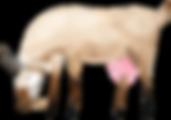 goat_1.png