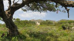 Church on the Akrotiri peninsula