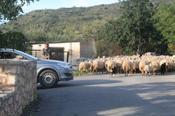Gavalohori traffic jam