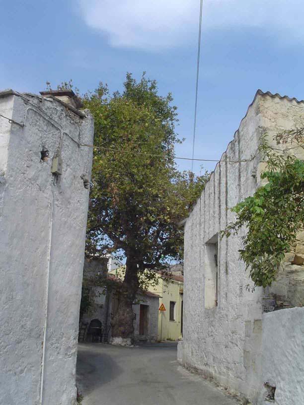 Another quiet village street