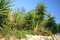 Yucca forest?