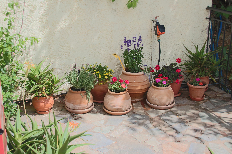 Shady rear garden