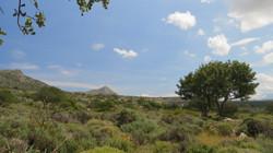 Akrotiri in spring