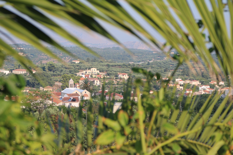 Village through the palms