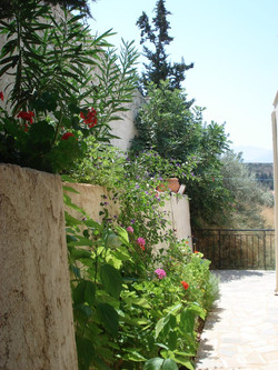 Rear garden borders