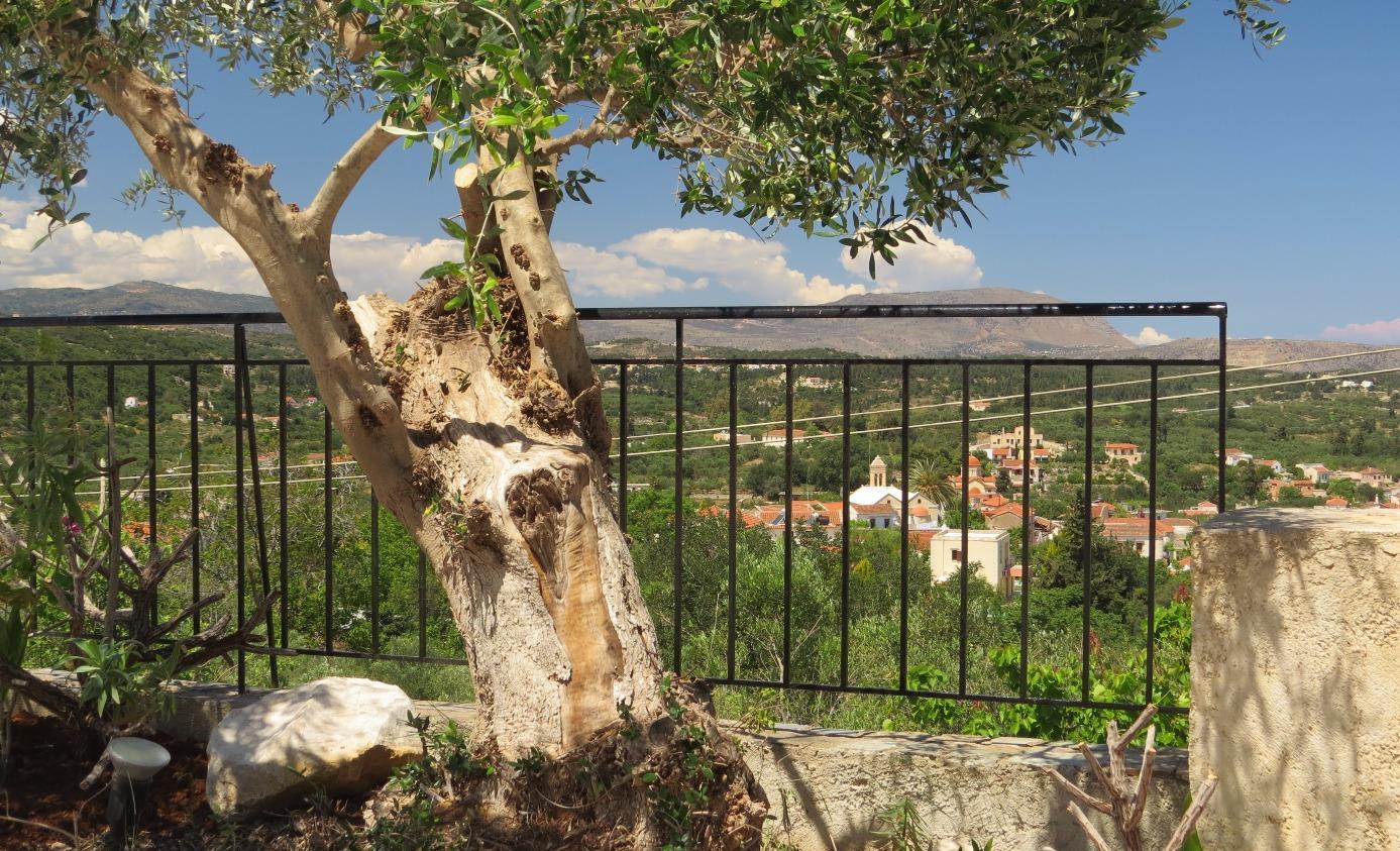 Village through the olive tree