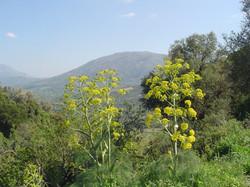 Amari valley