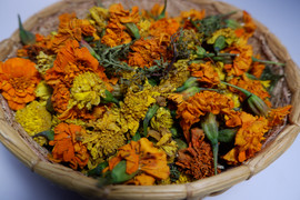 Marigolds for natural dyes.