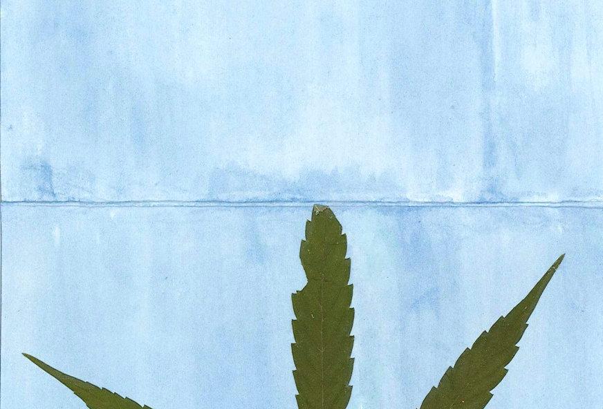 Cannabis & Brassica Pigment Card