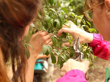 Wild Fabrics: A Day in Monsanto