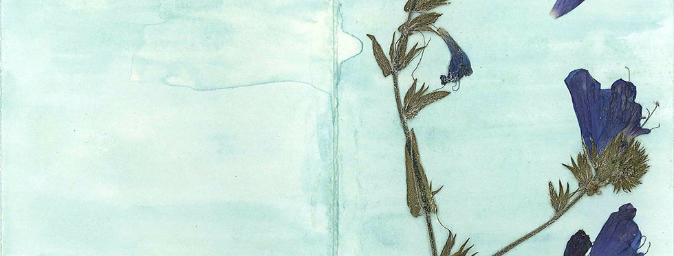 Blueweed & Spirulina Card
