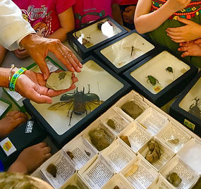 science insects