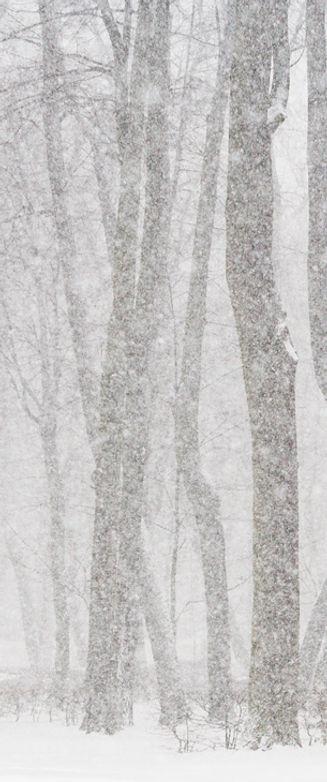 עצים | אופיר תשובה פסיכותרפיסט