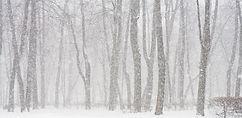 karlı Orman