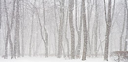 Divining and dowsing in winter with snow, perfect time for psychic, dream, energy work