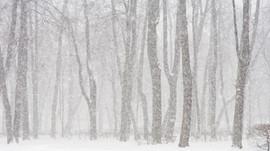 Feeling the Winter Blahs?