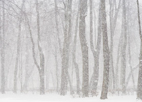 Choosing to Find Joy in the Snow