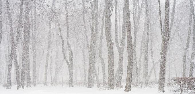 Dik sneeuwtapijt op komst voor Limburg