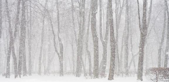 雪に覆われた森