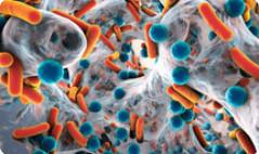 Public info key to combating superbugs