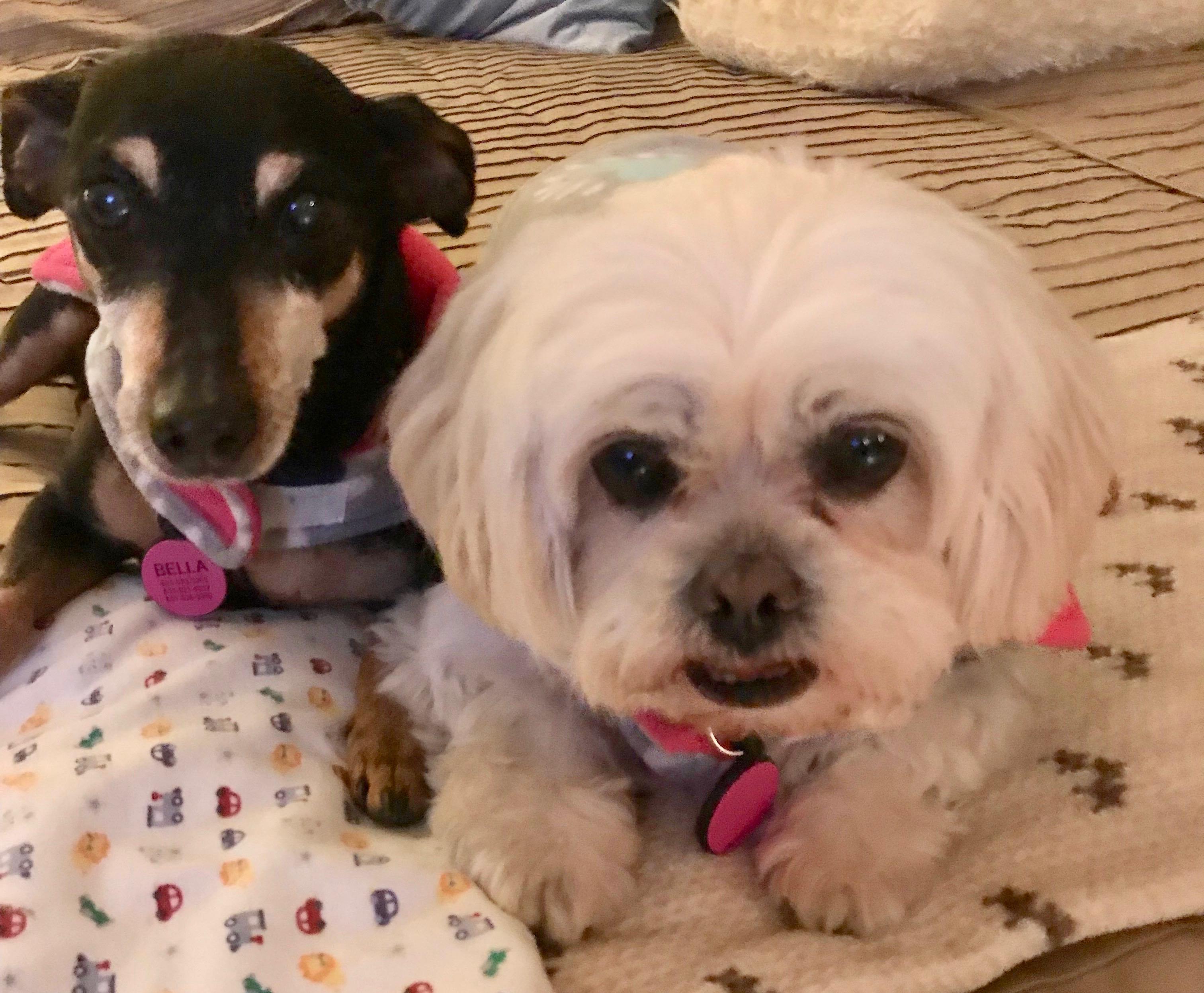 Bella and Daisy