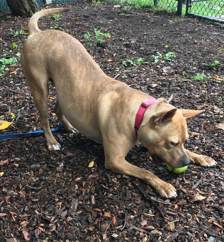 Smithtown Animal Shelter 410 E  Main Street, Smithtown, NY 11787
