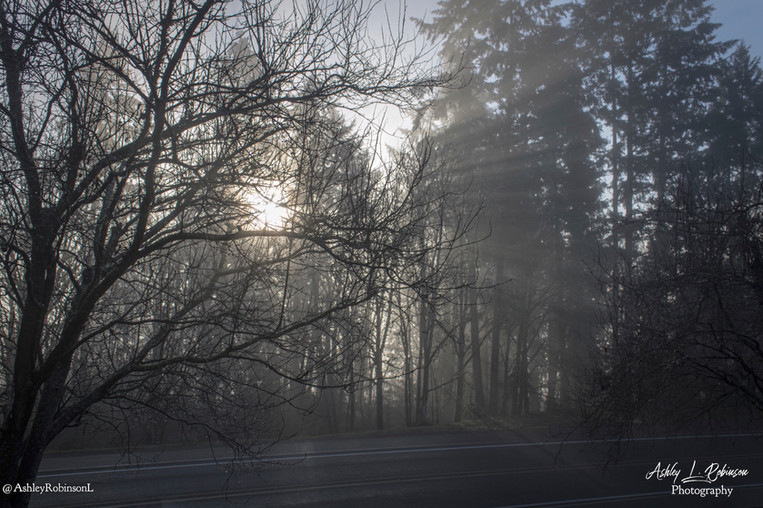 FoggyMorning122220.jpg
