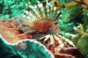 Snorkeling Koh Lipe - Inside