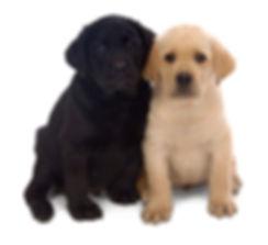 Puppy school group training