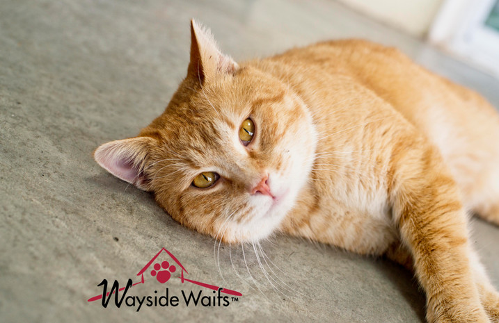 Wayside Waifs animal photography