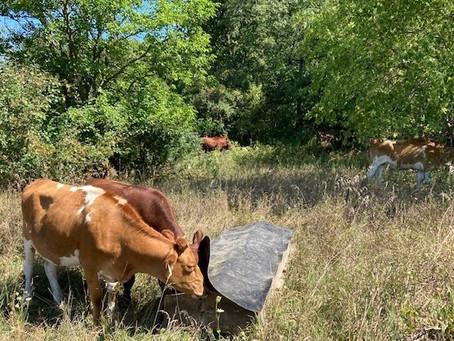 Empty brooder, DGA summit, grazing the woods, ground beef sale