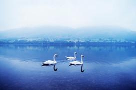 UllswaterSwansLR.jpg
