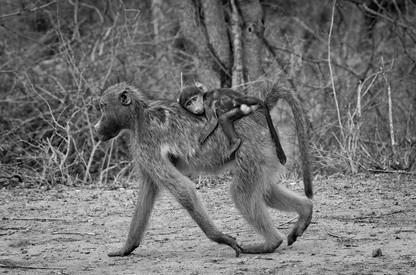 Monkey&BabyLR.jpg