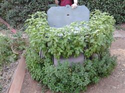 שלושה כיסשתילים עם צמחי תבלין