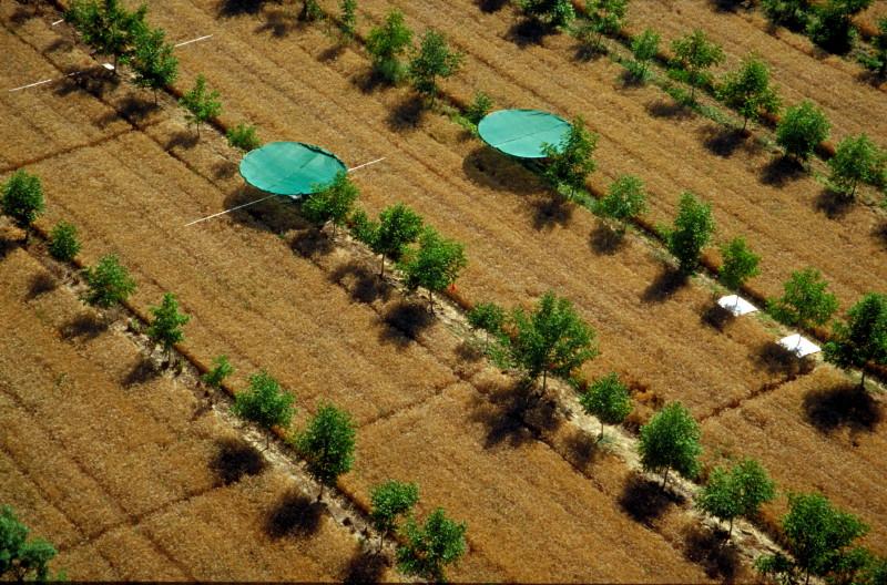 חלקת מחקר חקלאות יערנית בצרפת